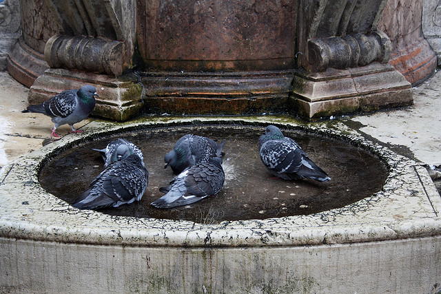 Venice and pigeons